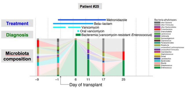 Microbiota dynamics of a bone marrow transplant patient