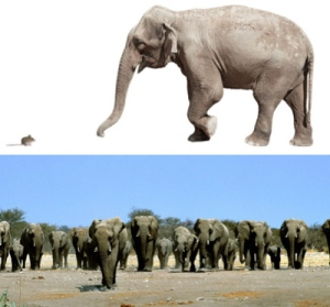 Organisms can vary a lot in body size among species, but within species they are very similar
