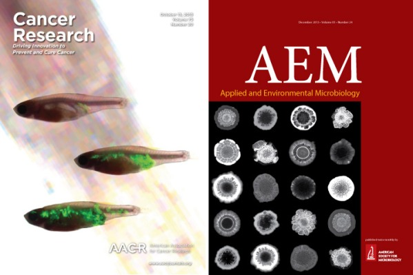 Covers from the October 15 issue of Cancer Research (collaboration with Richard White's lab) and the December 2015 about issue of Applied and Environmental Microbiology (collaboration with Lars Dietrich's lab and Soren Sorens's lab).