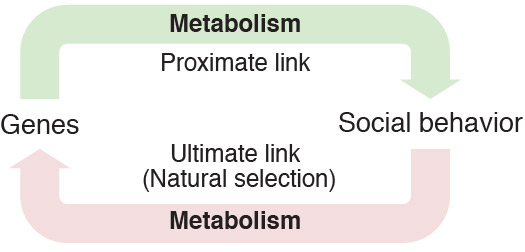 metabolism_and_social_behavior